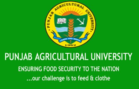 Job Vacancy For Msc Chemistry Candidates @ Punjab Agricultural University