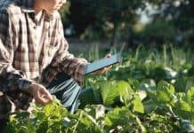 Govt Dept of Agriculture National Institute of Plant Health Management Chemistry Jobs 2019