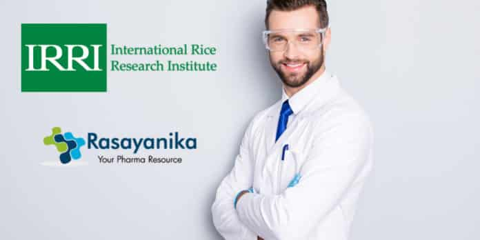 International Rice Research Institute Chemistry Associate Scientist Vacancy Salary 1.03 Lakh Per month