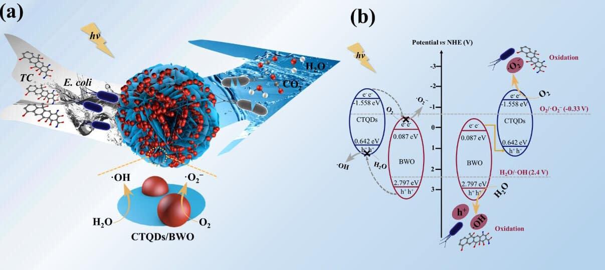 Z-scheme catalyst for impurities in water